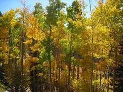 Sign petition to condemn fracking in the Santa Fe National Forest