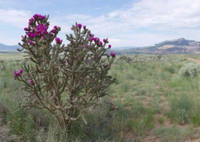 Cholla Cactus by Canton Becker