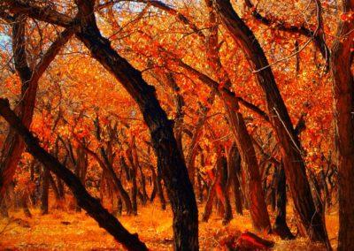 Cottonwood by echoroo